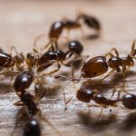 How to Determine you have Pest Infestation Problem