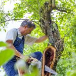 Great Services That Your Local Tree Surgeon Can Provide