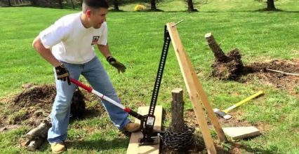 Reclaim Parts of your Garden with Tree Stump Removal